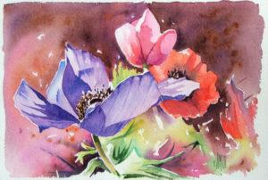 aquarelle anemone