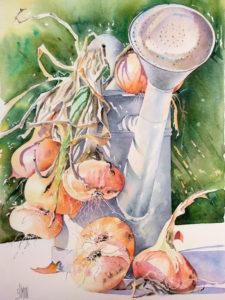 aquarelle arrosoir oignons