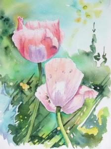 aquarelle fleurs de pavot
