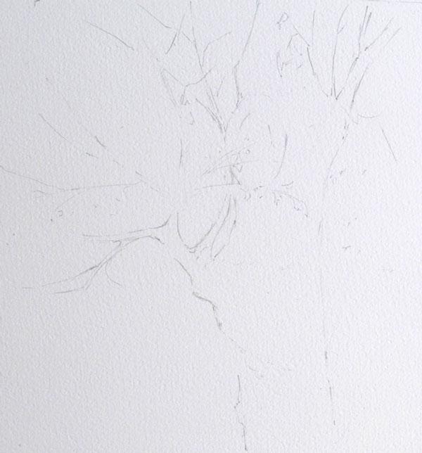 optimisation aquarelle ombre arbre esquisse