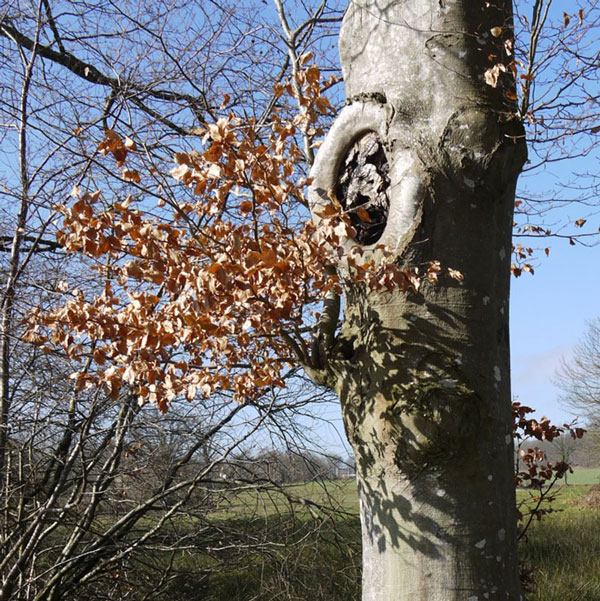 optimisation aquarelle ombre arbre1