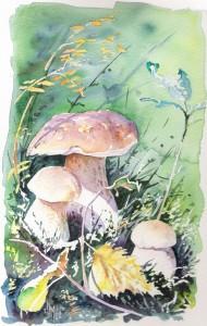 optimisation aquarelle watercolor champignon