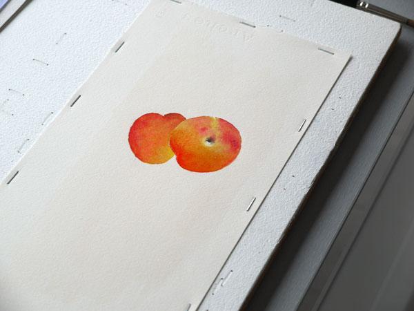 Aquarelle abricot glacis etape2