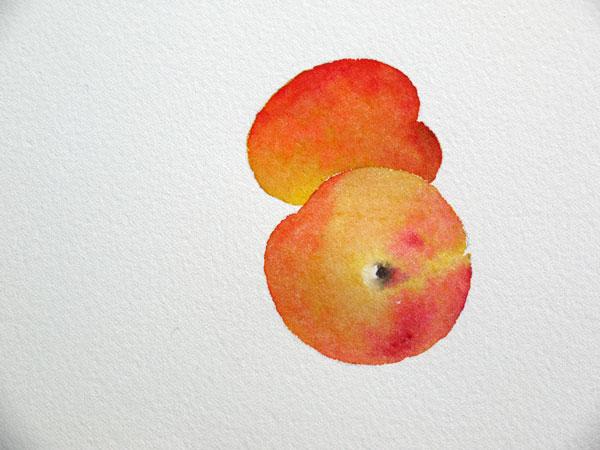 Aquarelle abricot sechage