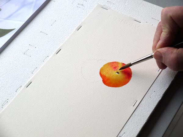 Aquarelle abricot sepia