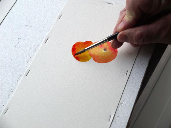 Aquarelle construction deuxieme abricot etape6