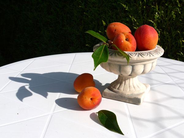 Photo reference nature morte abricot