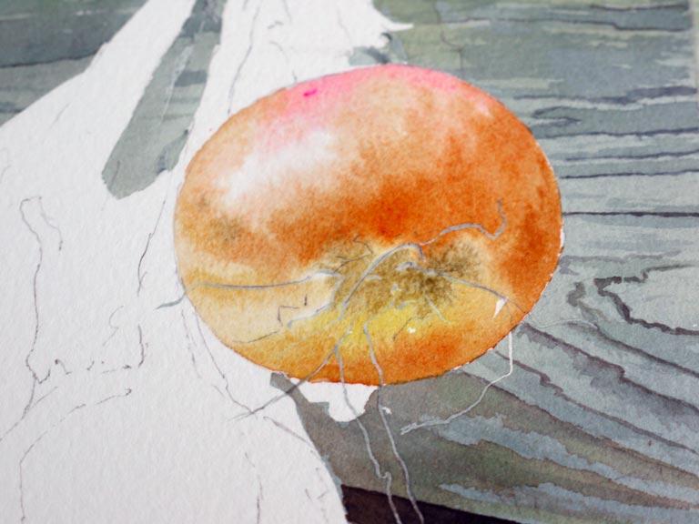 16-aquarelle-oignon