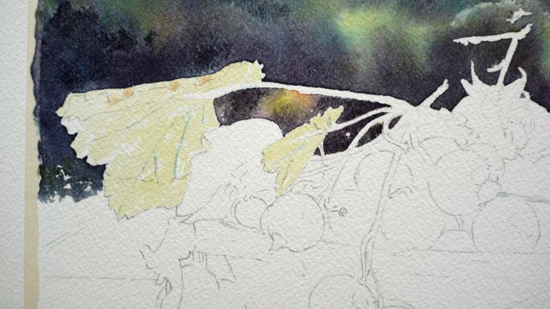 14-aquarelle-cassis-groseille