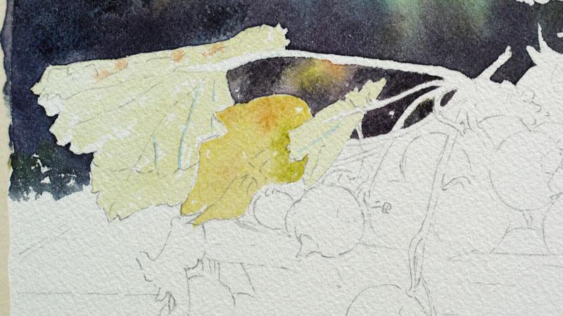 15-aquarelle-cassis-groseille
