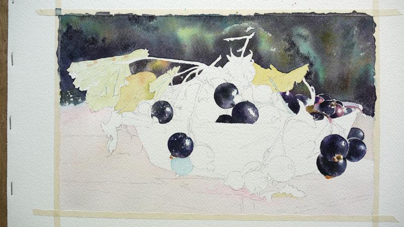 18-aquarelle-cassis-groseille