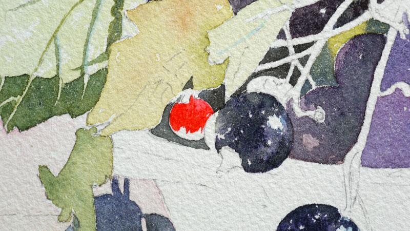 19-aquarelle-cassis-groseille