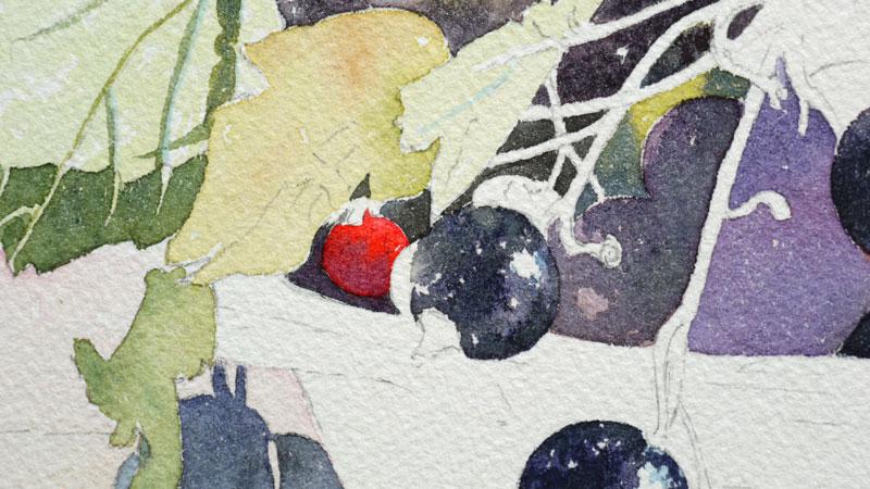 20-aquarelle-cassis-groseille