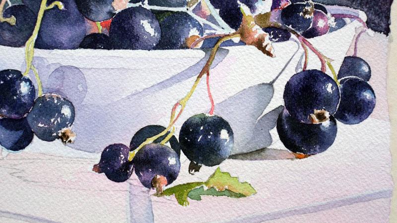 27-aquarelle-cassis-groseille
