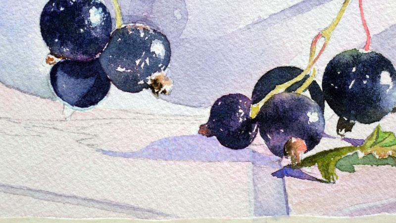 28-aquarelle-cassis-groseille
