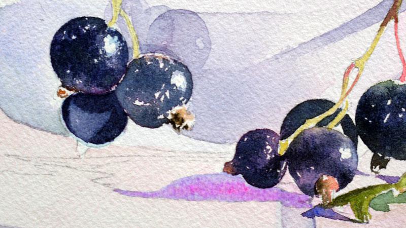29-aquarelle-cassis-groseille