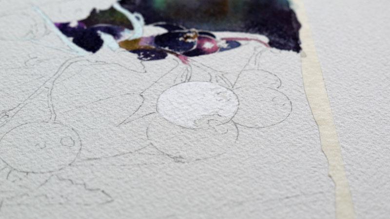 8-aquarelle-cassis-groseille