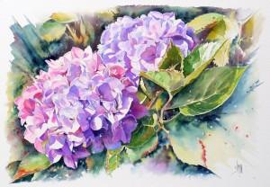Aquarelle Hortensia e1449529646524