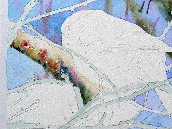 joel simon aquarelle bouvreuil 7