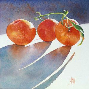 14 Mandarines de Corse