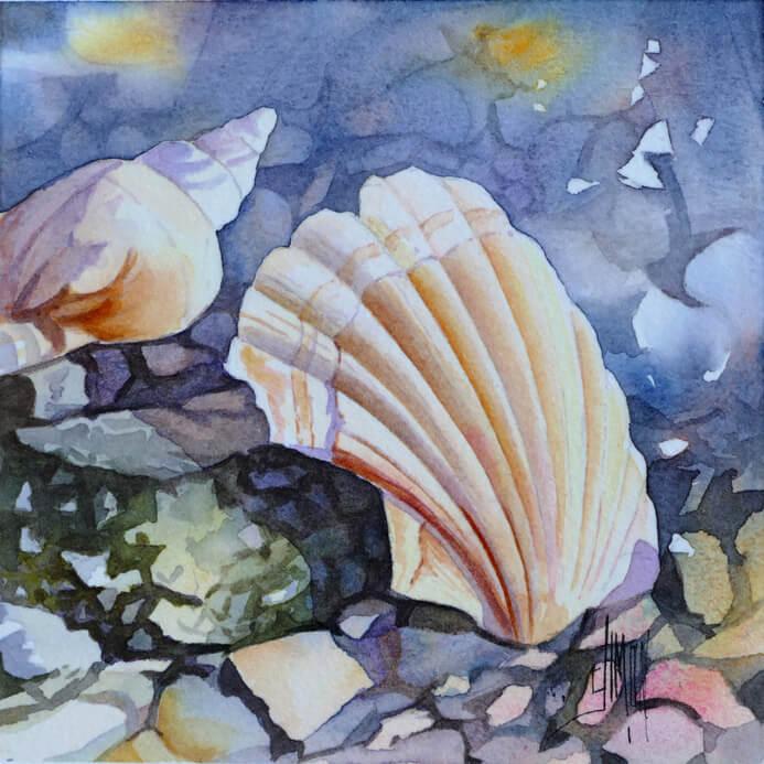 Aquarelle de coquillage saint Jacques 2